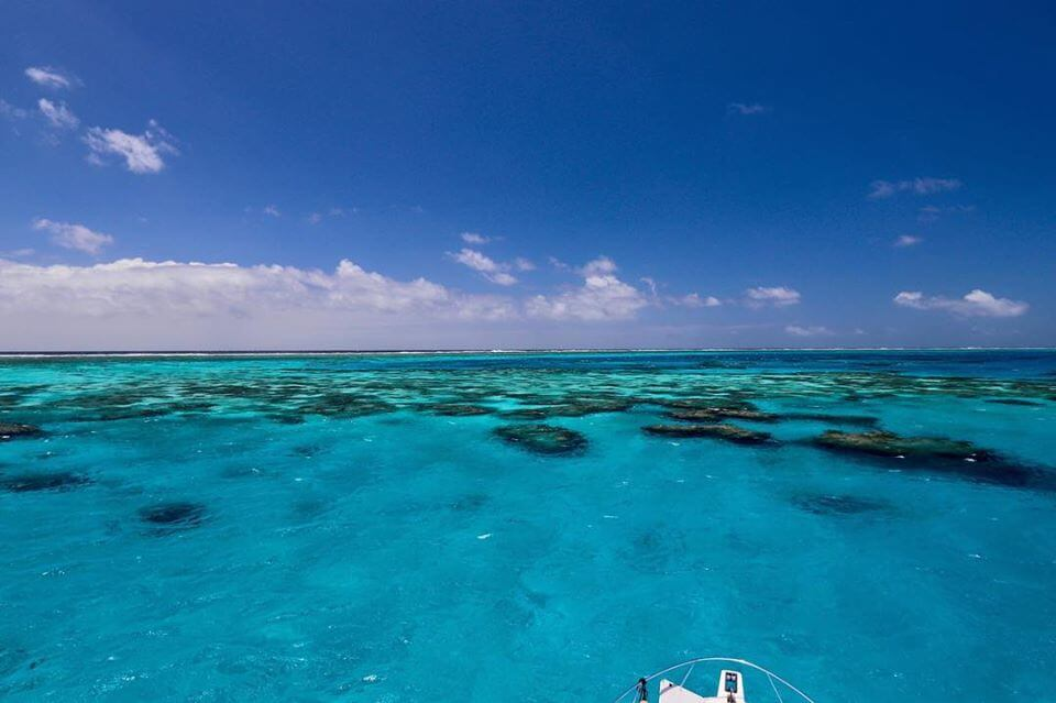 The Great Barrier Reef in all its glory #reefalive