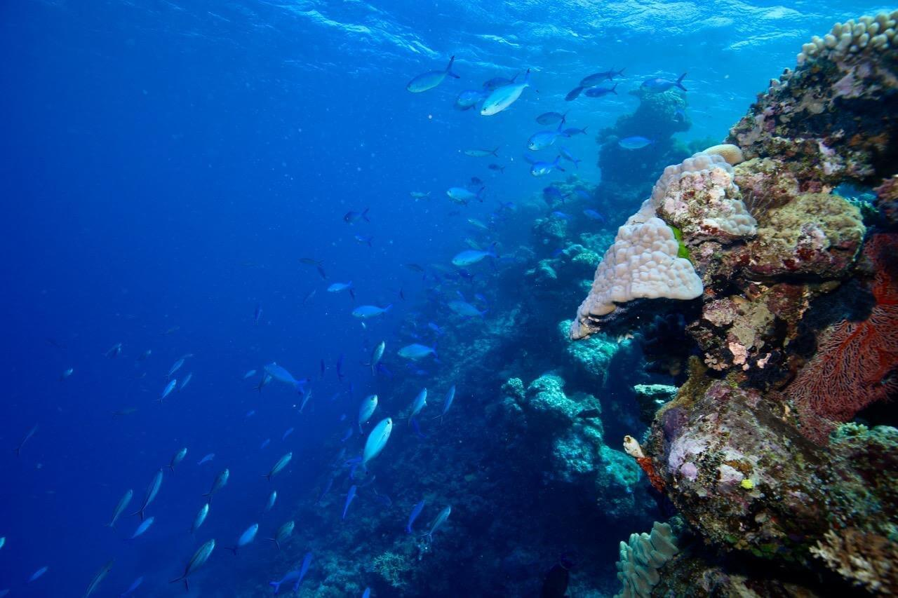 Snorkelling heaven #reefalive