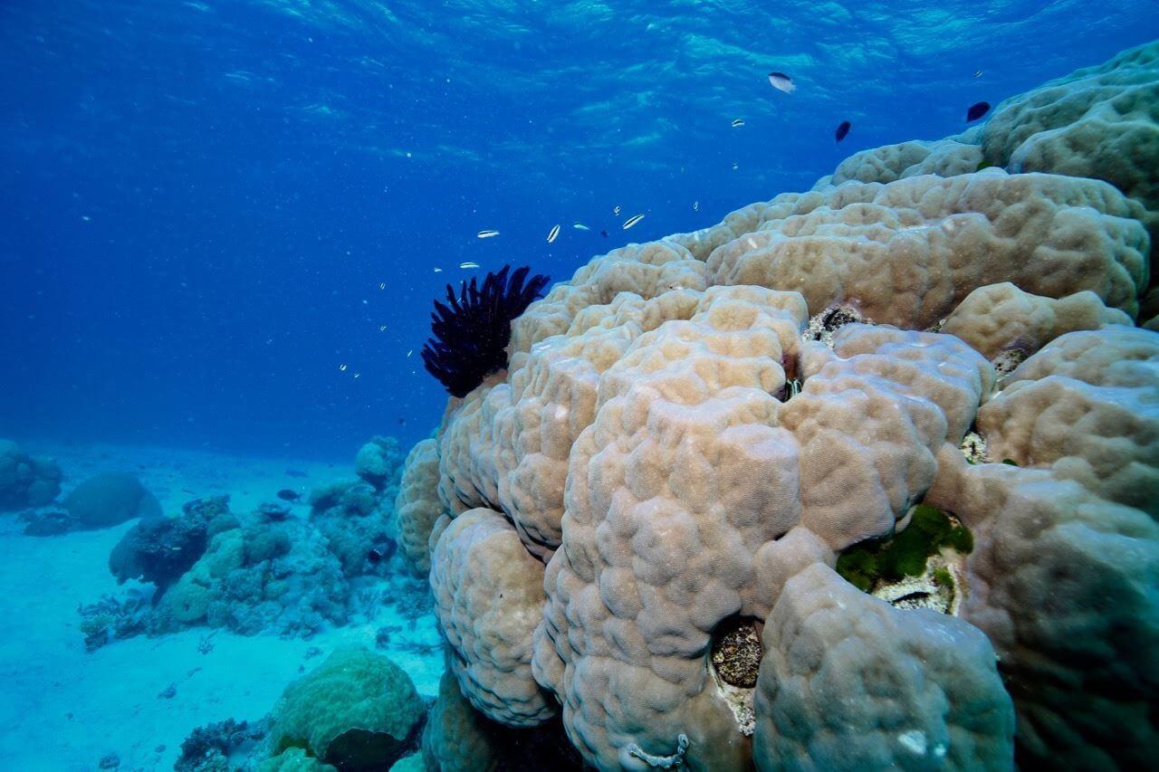 Stunning coral on TheGBR